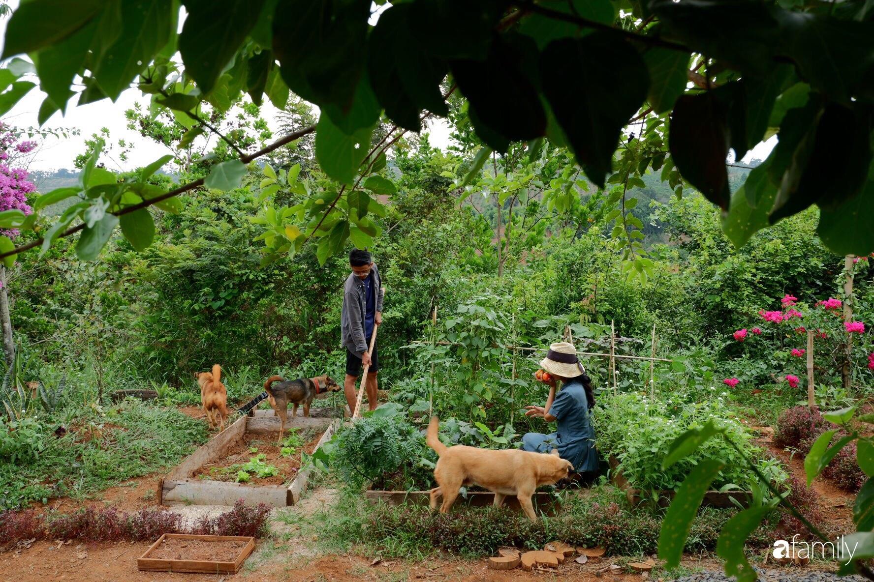 Khu vườn xanh tươi rộn ràng cây lá của cặp đôi quyết rời Sài Gòn về rừng tìm chốn bình yên - Ảnh 2.