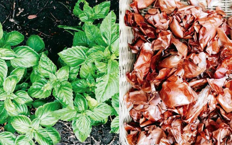 Đừng bỏ phí nguồn phân bón hữu cơ giúp cây trồng lớn nhanh như thổi nhờ rác thải thực phẩm