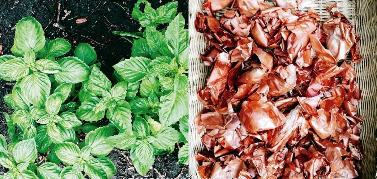 Đừng bỏ phí nguồn phân bón hữu cơ giúp cây trồng lớn nhanh như thổi nhờ rác thải thực phẩm - Ảnh 1.