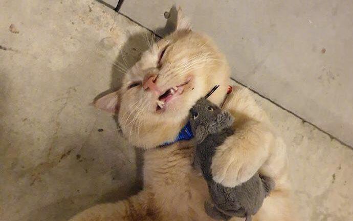 """Ai nuôi mèo cũng nuôi thêm hi vọng boss sẽ chăm chỉ bắt chuột, nhưng nhìn hình ảnh này thì hội """"con sen"""" sẽ từ bỏ ước mơ ngay lập tức"""