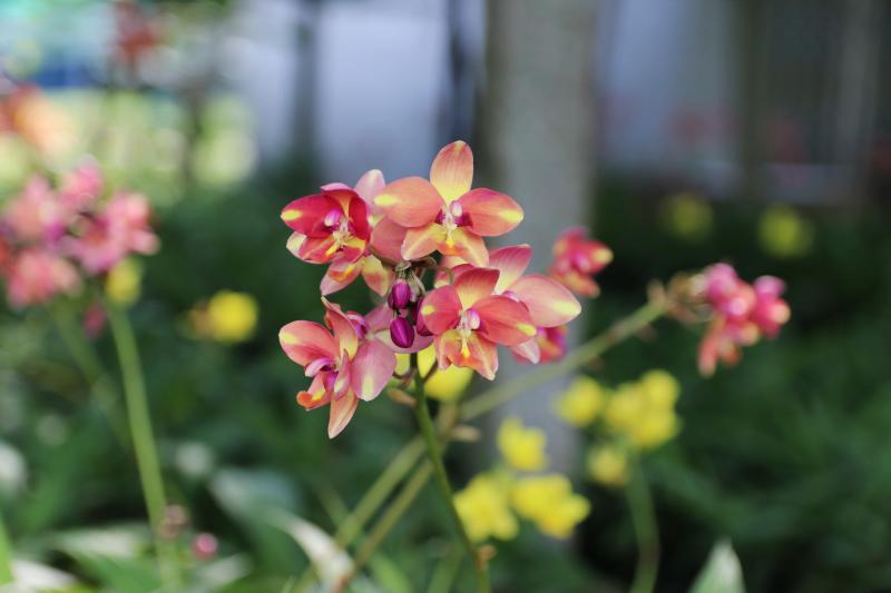 Những cây cảnh, loại hoa phù hợp để mừng tân gia, mừng thọ, khai trương - Ảnh 5.