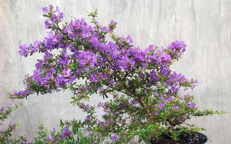 Những cây cảnh, loại hoa phù hợp để mừng tân gia, mừng thọ, khai trương