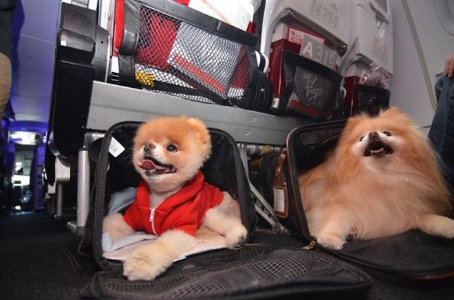 """Đi du lịch nhưng không muốn để """"boss"""" cô đơn ở nhà, đây chính là những điều quan trọng cần biết để thú cưng được lên máy bay cùng bạn - Ảnh 1."""