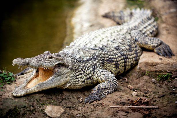 Sát nhân hàng loạt đội lốt bác sĩ giết hơn 50 người và lợi dụng các con cá sấu để che giấu tội ác - Ảnh 2.