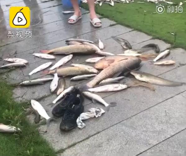 Mưa lũ khiến nước sông dâng cao và đục ngầu, hàng trăm người bất chấp nguy hiểm câu cá, cảnh tượng hãi hùng gây chú ý MXH - Ảnh 3.