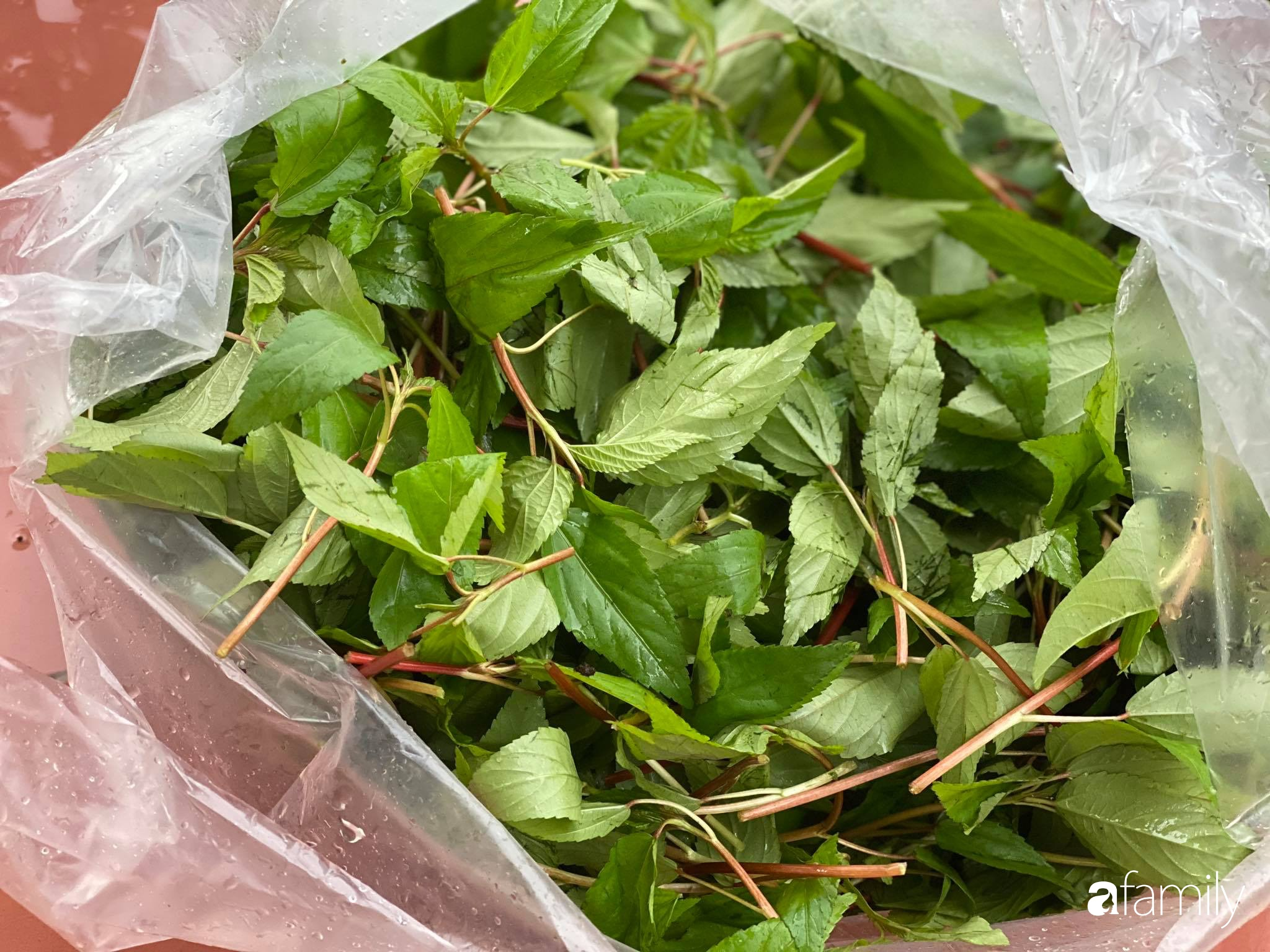 Con gái chi 500 triệu đồng xây nhà vườn container để bố về hưu thỏa mãn đam mê trồng rau ở Sài Gòn - Ảnh 10.