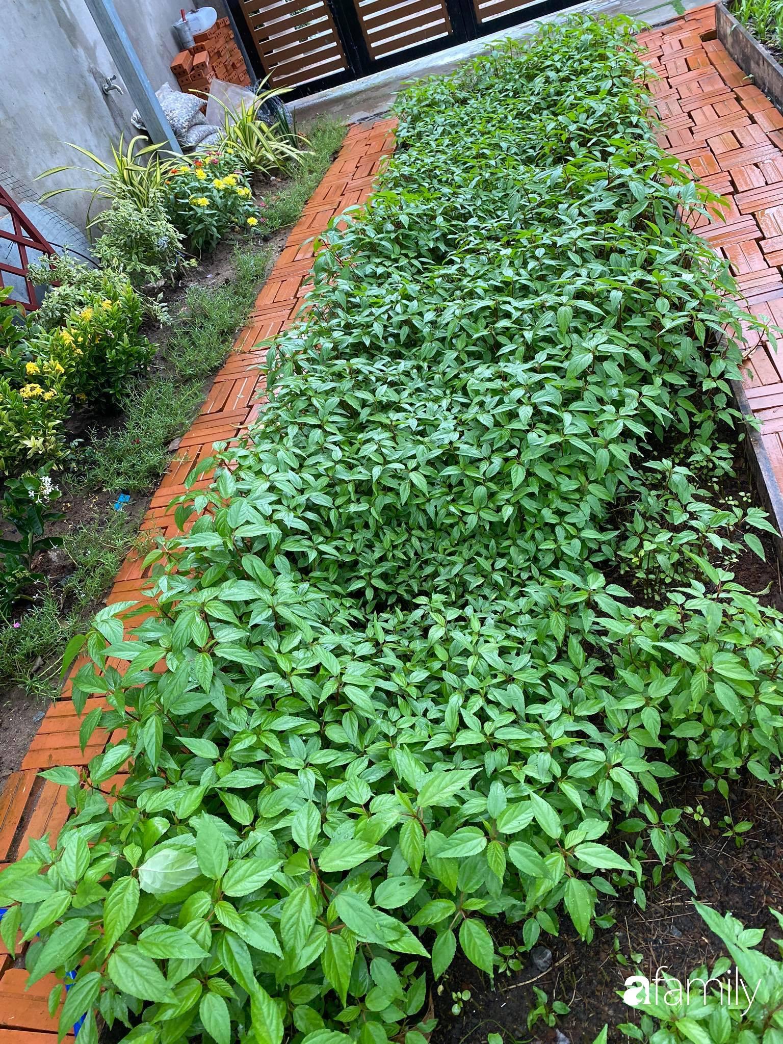 Con gái chi 500 triệu đồng xây nhà vườn container để bố về hưu thỏa mãn đam mê trồng rau ở Sài Gòn - Ảnh 6.