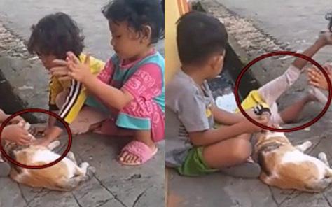 Nựng phải mèo cưng của bạn, cậu bé không ngờ lại bị hại đến bật nhào xuống lỗ cống và cái kết khiến ai cũng bật cười