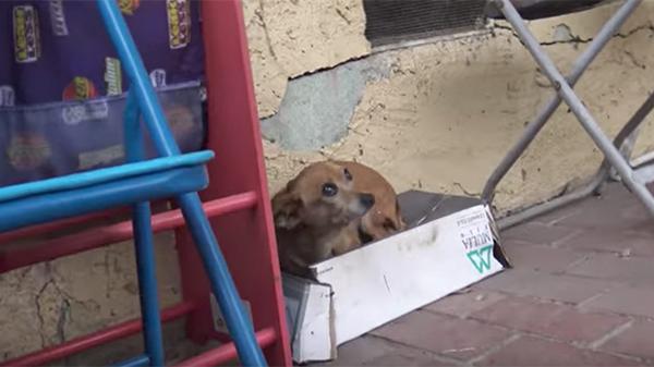 Con chó bị bỏ rơi trên đường suốt 5 tháng trời, tổ chức động vật đến cứu thì nhận ra điều đặc biệt ở con vật khi nhấc bổng nó lên - Ảnh 1.