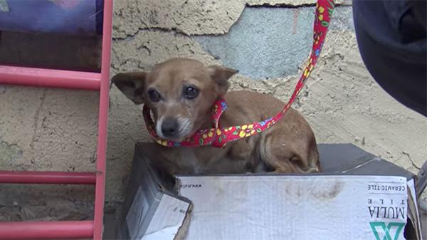 Con chó bị bỏ rơi trên đường suốt 5 tháng trời, tổ chức động vật đến cứu thì nhận ra điều đặc biệt ở con vật khi nhấc bổng nó lên - Ảnh 2.