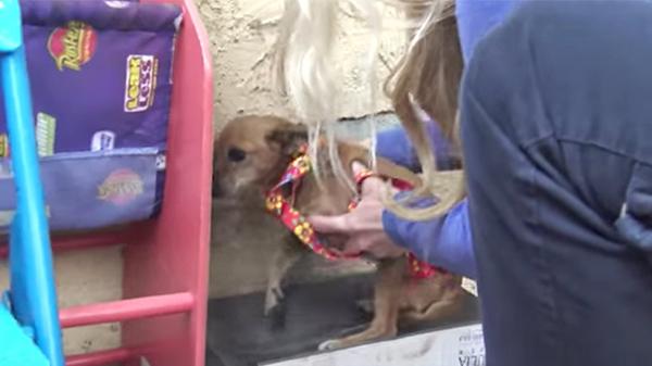 Con chó bị bỏ rơi trên đường suốt 5 tháng trời, tổ chức động vật đến cứu thì nhận ra điều đặc biệt ở con vật khi nhấc bổng nó lên - Ảnh 3.