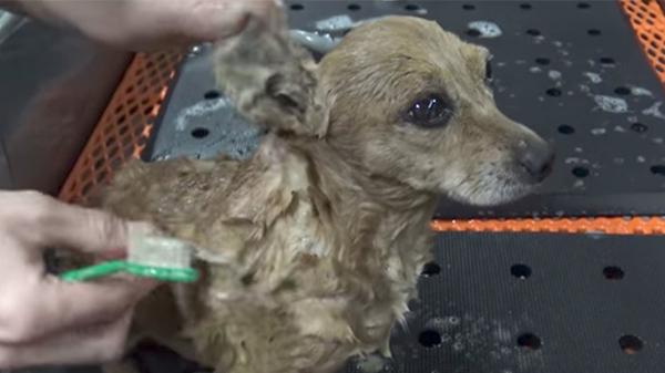Con chó bị bỏ rơi trên đường suốt 5 tháng trời, tổ chức động vật đến cứu thì nhận ra điều đặc biệt ở con vật khi nhấc bổng nó lên - Ảnh 4.