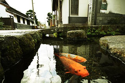 Chứng minh độ sạch của cống rãnh, Nhật Bản nuôi cá Koi thành từng đàn dưới làn nước cống trong vắt - Ảnh 7.