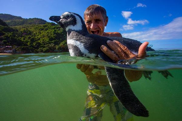"""Những sự thật thú vị về chim cánh cụt khiến bạn phải """"ố á"""" vì ngạc nhiên, hóa ra loài vật dễ thương này còn có cả kho tàng những câu chuyện hài hước - Ảnh 2."""