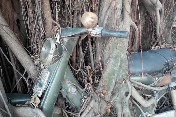 Thực hư hợp thể cây cổ thụ ôm chiếc xe máy gần 30 năm với biết bao lời đồn đoán được rao bán với giá 7 tỷ đồng - Ảnh 4.