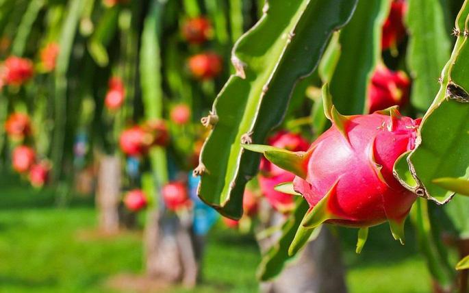 """Từ A-Z cách chọn các loại trái cây mùa hè """"bách phát bách trúng"""" trái nào cũng ngon - Ảnh 5."""