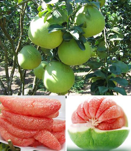 """Từ A-Z cách chọn các loại trái cây mùa hè """"bách phát bách trúng"""" trái nào cũng ngon - Ảnh 10."""