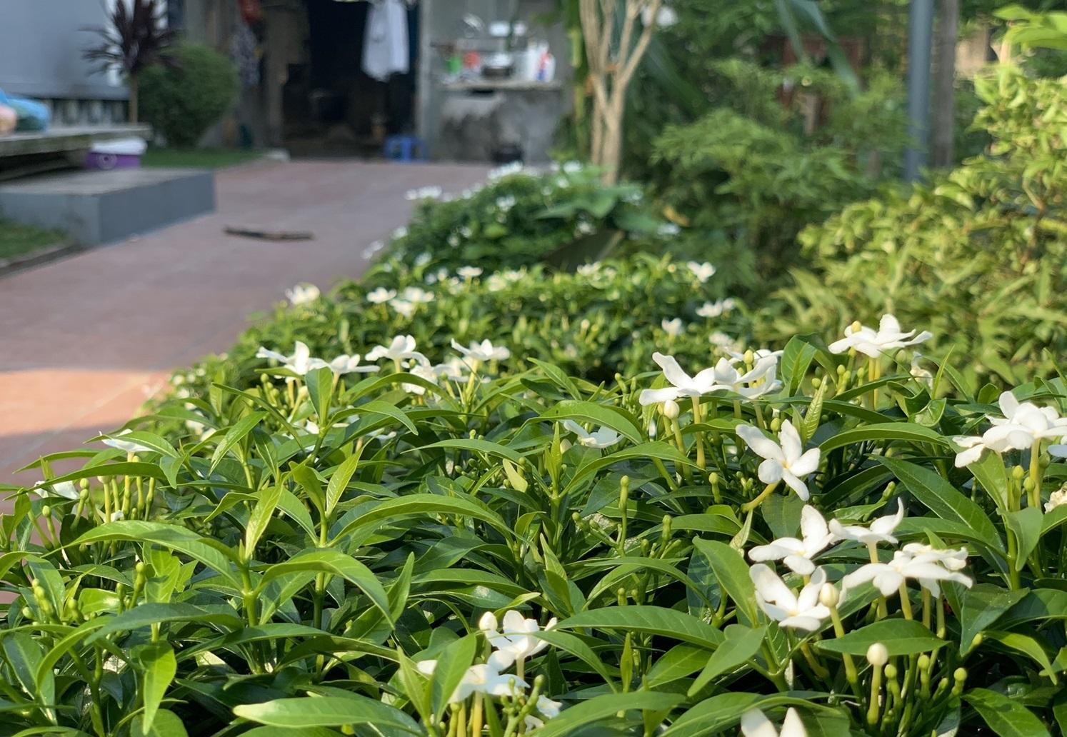 11 1598799900003338155101 - Con trai xây nhà vườn bên đồng lúa xanh mát tặng bố mẹ an hưởng tuổi già ở Vĩnh Phúc