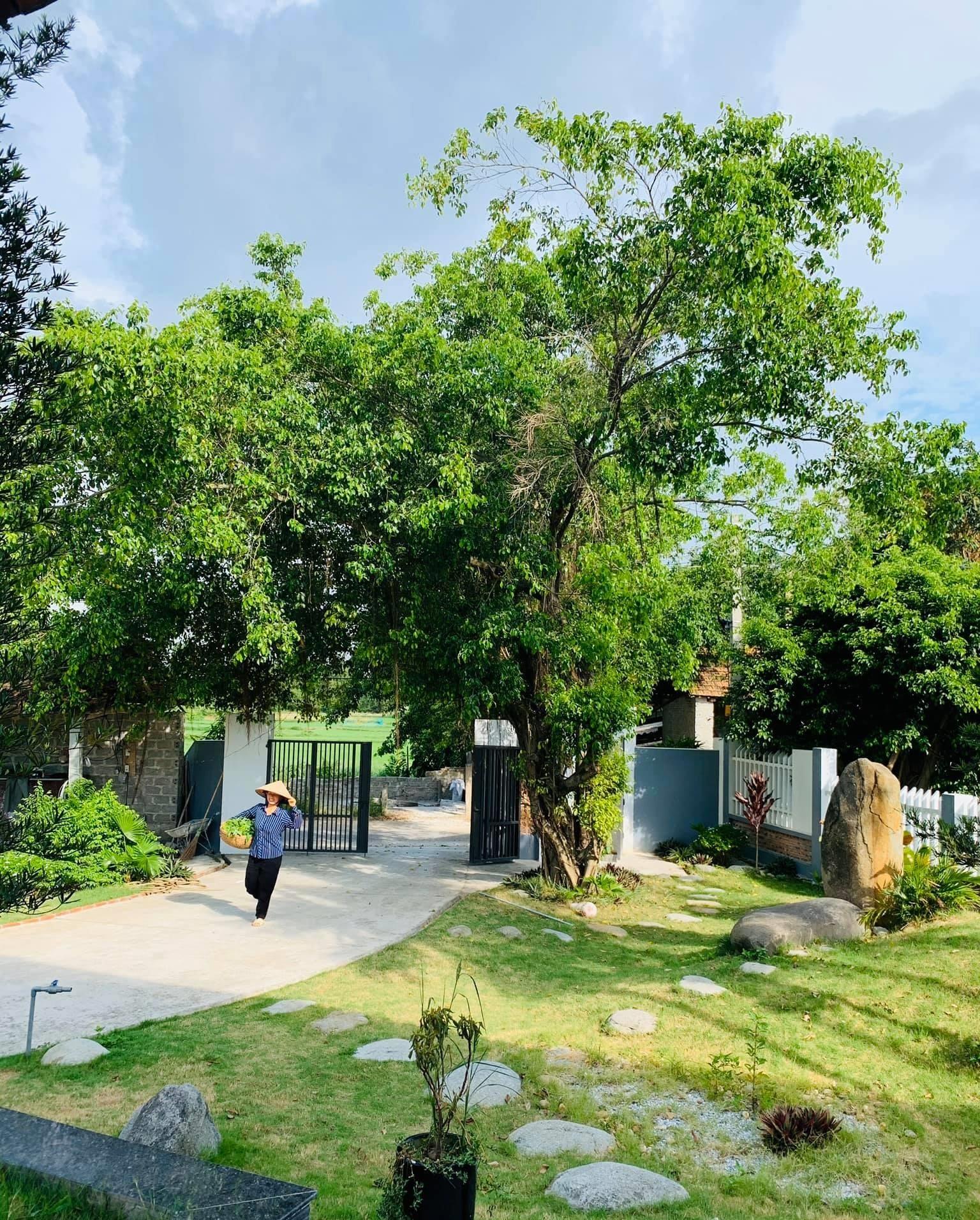 6 15987998998721019766371 - Con trai xây nhà vườn bên đồng lúa xanh mát tặng bố mẹ an hưởng tuổi già ở Vĩnh Phúc