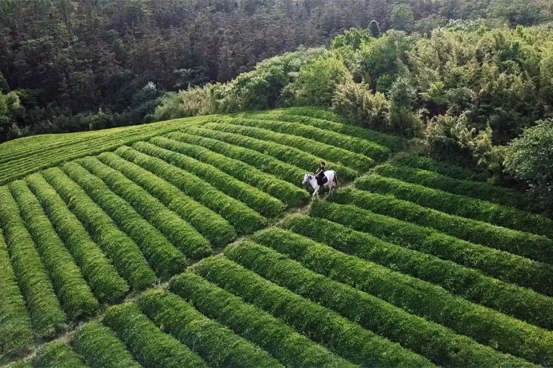 Cô gái xinh đẹp quyết nghỉ việc về quê xây lâu đài trắng, làm vườn cùng bố trên mảnh đất 3000m² - Ảnh 15.