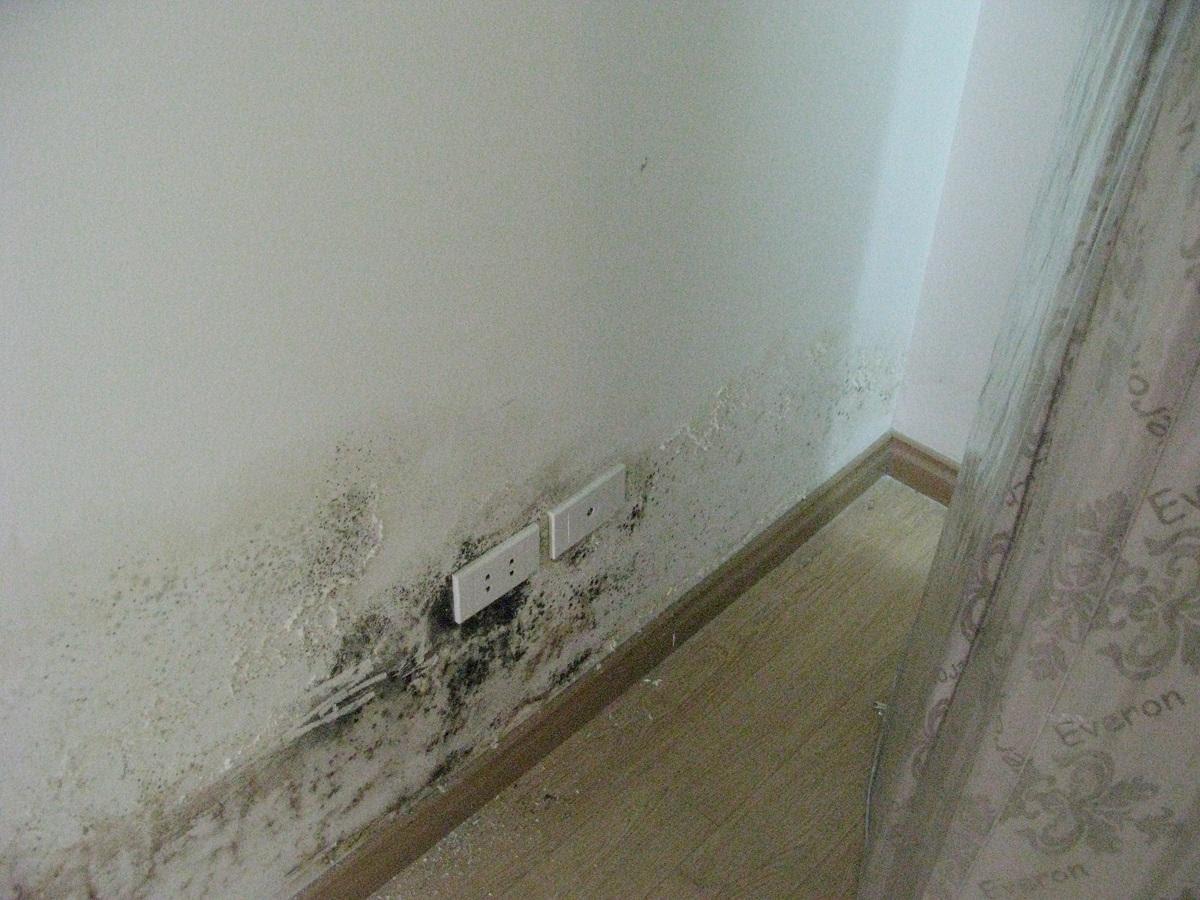 Mùa mưa đến, nhà cửa bắt đầu ẩm mốc, bốc mùi và đầy muỗi, giải quyết thế nào đây? - Ảnh 1.