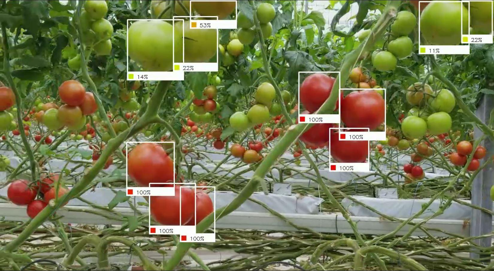Robot sử dụng trí thông minh giúp chị em xử lý gọn các loại quả chín trong vườn chỉ trong tích tắc - Ảnh 4.