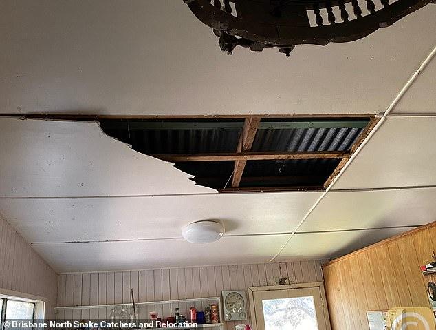"""Trở về nhà, người đàn ông phát hiện trần nhà rơi xuống sàn trước khi tìm thấy thủ phạm là 2 """"bé Na"""" cùng mối quan hệ kịch tính giữa chúng - Ảnh 1."""