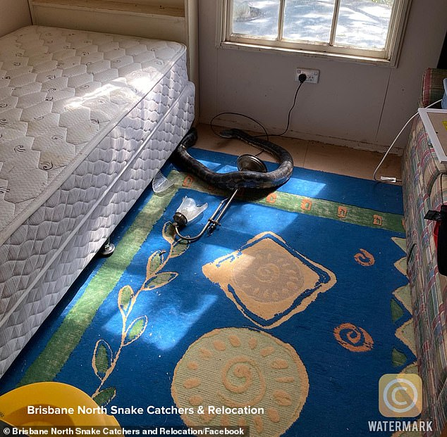 """Trở về nhà, người đàn ông phát hiện trần nhà rơi xuống sàn trước khi tìm thấy thủ phạm là 2 """"bé Na"""" cùng mối quan hệ kịch tính giữa chúng - Ảnh 4."""