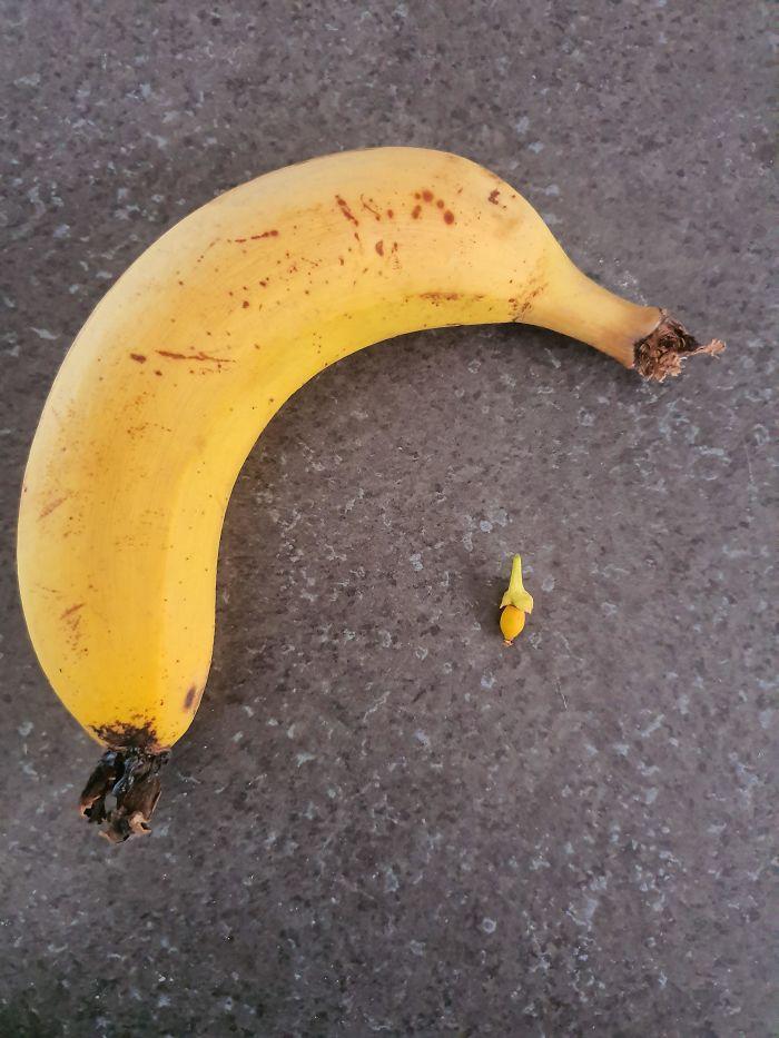 Bỏ công chăm bẵm nhưng lúc thu hoạch quả ngọt không thấy, chỉ thu về mỗi cục tức vì trái nào trái nấy cũng như dành cho người tí hon - Ảnh 7.