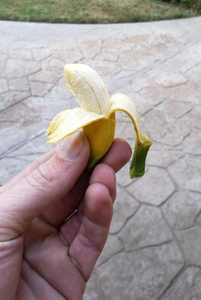 Bỏ công chăm bẵm nhưng lúc thu hoạch quả ngọt không thấy, chỉ thu về mỗi cục tức vì trái nào trái nấy cũng như dành cho người tí hon - Ảnh 14.