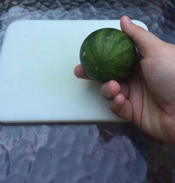 Bỏ công chăm bẵm nhưng lúc thu hoạch quả ngọt không thấy, chỉ thu về mỗi cục tức vì trái nào trái nấy cũng như dành cho người tí hon - Ảnh 16.