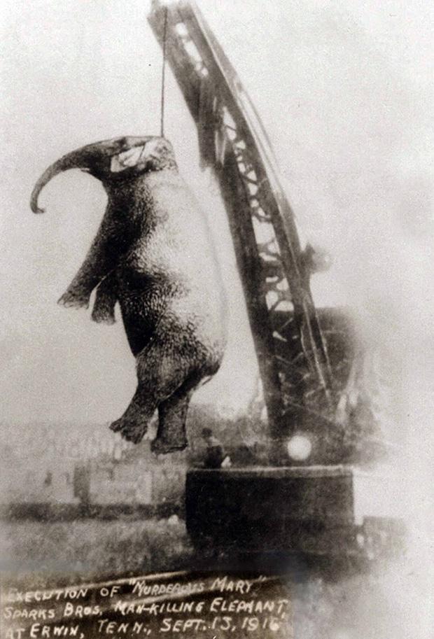 Bức hình như tranh vẽ nhưng sự thật là ảnh chụp và phía sau đó là câu chuyện con voi bất hạnh nhất trong lịch sử khiến nhiều người rơi lệ - Ảnh 4.