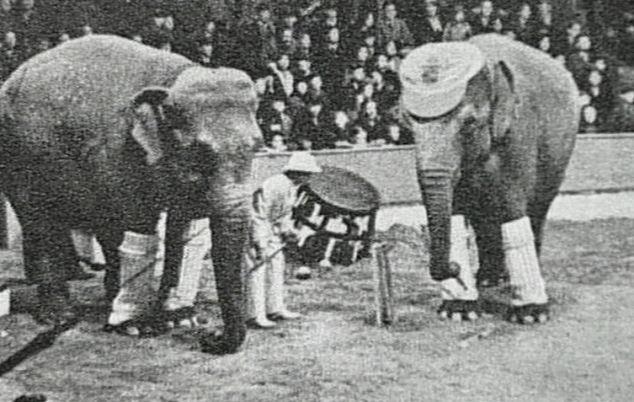 Bức hình như tranh vẽ nhưng sự thật là ảnh chụp và phía sau đó là câu chuyện chú voi bất hạnh nhất trong lịch sử khiến nhiều người rơi lệ - Ảnh 1.