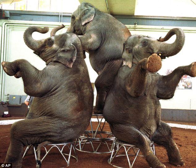 Bức hình như tranh vẽ nhưng sự thật là ảnh chụp và phía sau đó là câu chuyện chú voi bất hạnh nhất trong lịch sử khiến nhiều người rơi lệ - Ảnh 2.