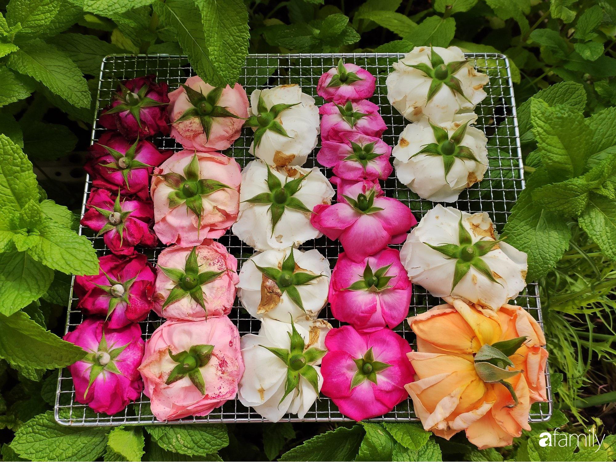 """Cô gái Việt ở Nhật hướng dẫn cách trồng cây, giâm cành """"kiểu con nhà nghèo"""" cho những người thuê trọ hay sống ở nhà phố chật hẹp - Ảnh 8."""