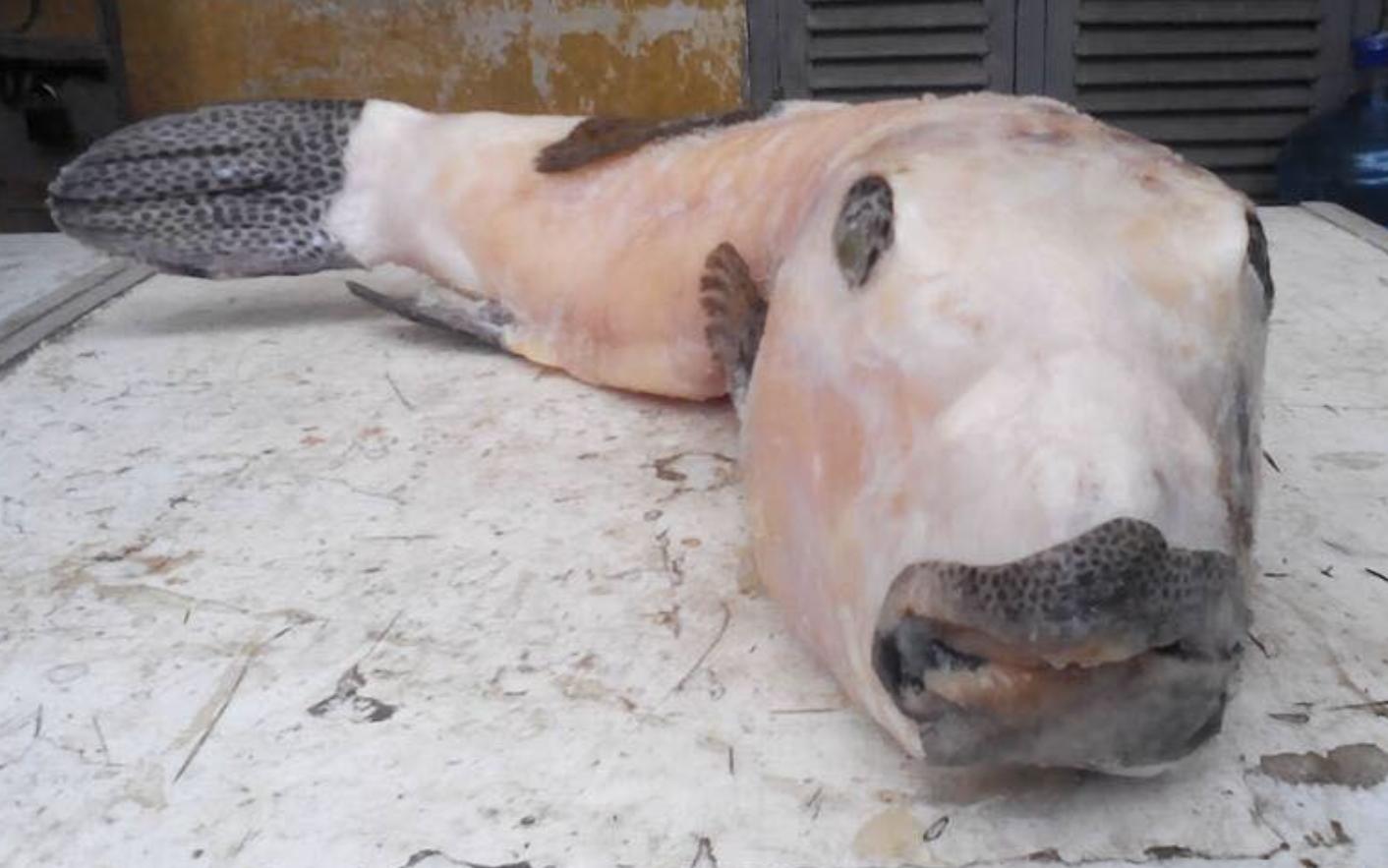 TP.HCM: Ăn bao tử cá mặt thỏ, người đàn ông 40 tuổi hôn mê nguy kịch