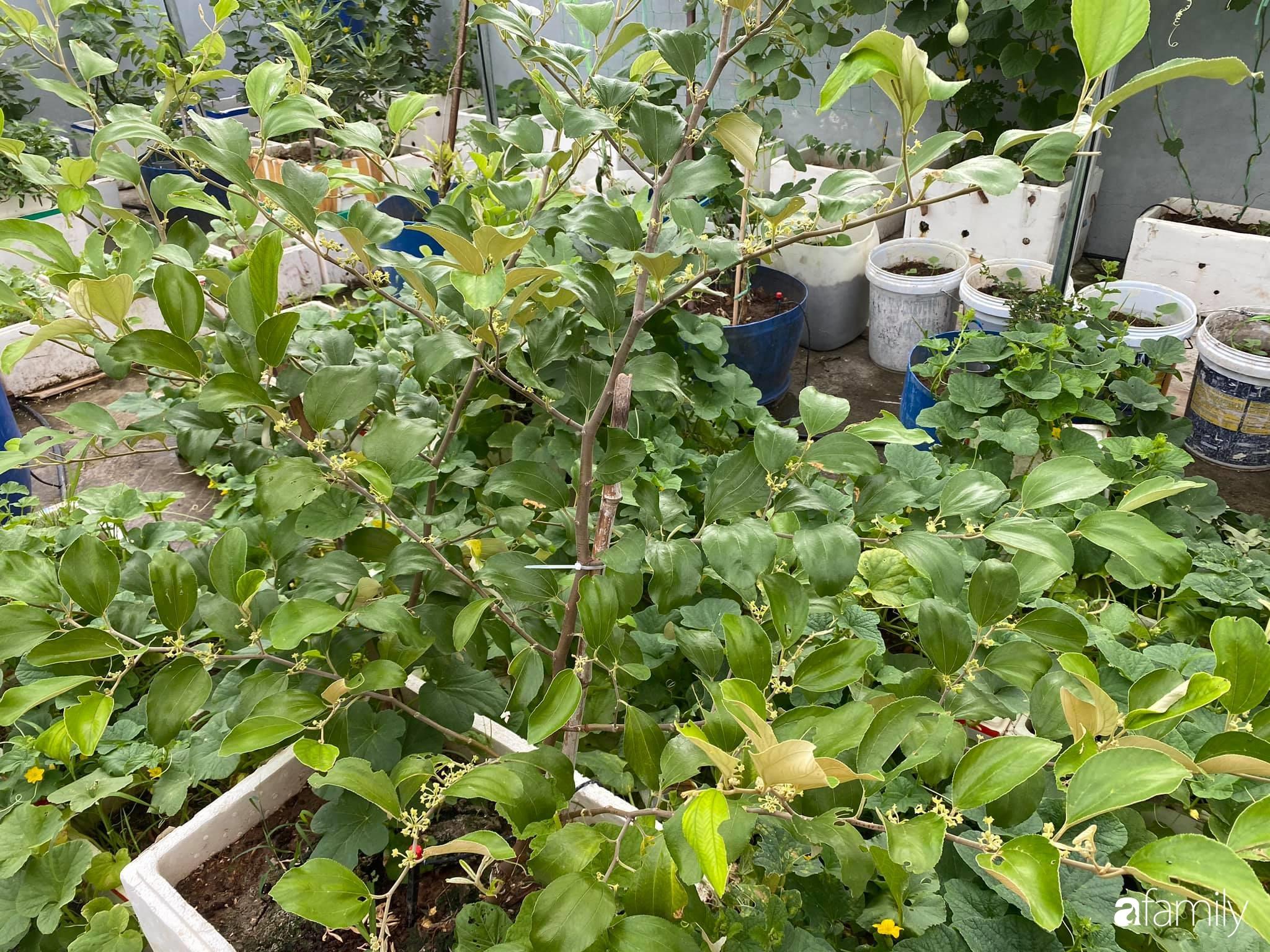 Tận dụng sân thượng chung cư, nữ giám đốc Hà Nội chi 8 triệu trồng đủ loại rau quả sạch - Ảnh 4.