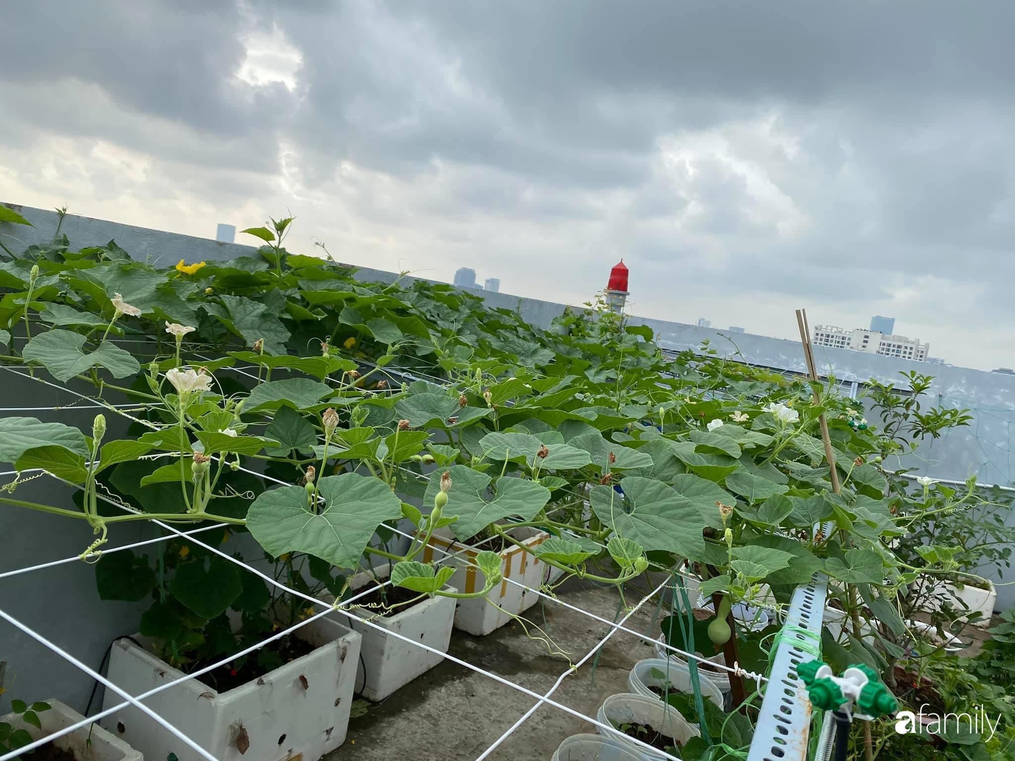 Tận dụng sân thượng chung cư, nữ giám đốc Hà Nội chi 8 triệu trồng đủ loại rau quả sạch - Ảnh 7.