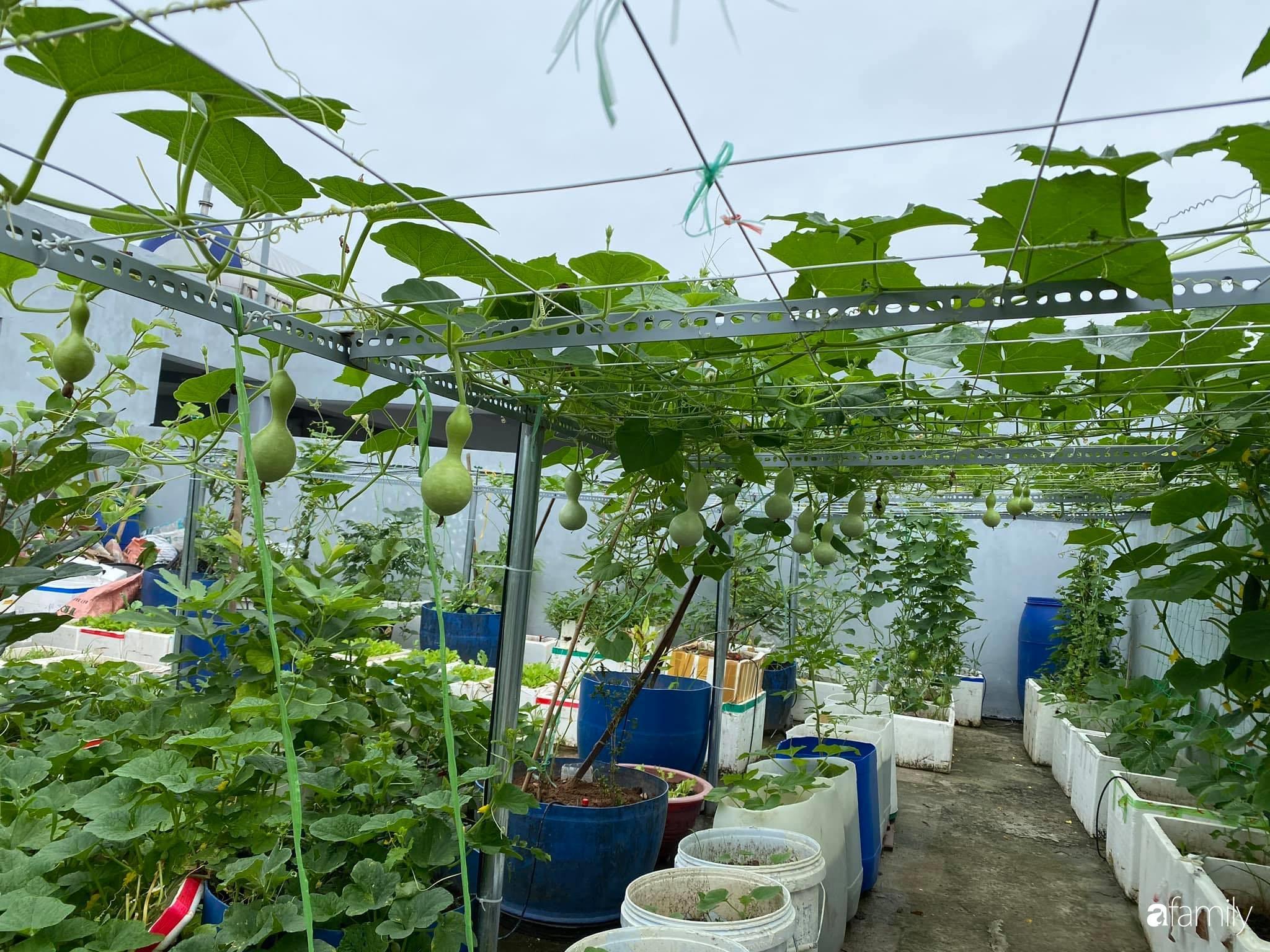 Tận dụng sân thượng chung cư, nữ giám đốc Hà Nội chi 8 triệu trồng đủ loại rau quả sạch - Ảnh 2.