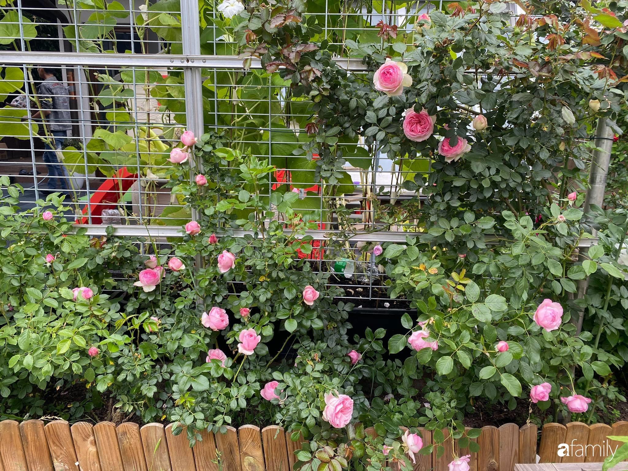 Khu vườn 300m² giữa đô thị náo nhiệt vẫn an yên, thư thái nhờ mẹ Việt trồng cây và hoa tốt tươi - Ảnh 9.