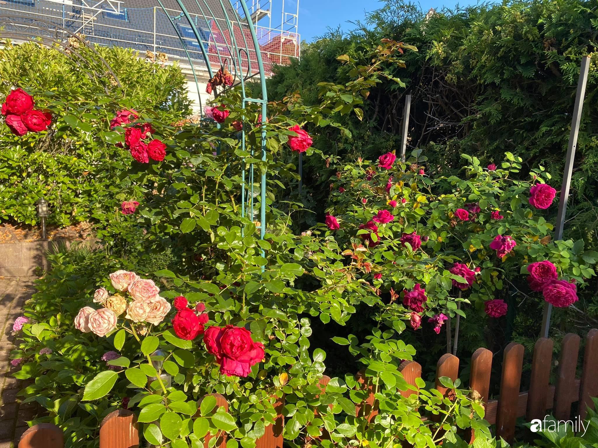 Khu vườn 300m² giữa đô thị náo nhiệt vẫn an yên, thư thái nhờ mẹ Việt trồng cây và hoa tốt tươi - Ảnh 11.