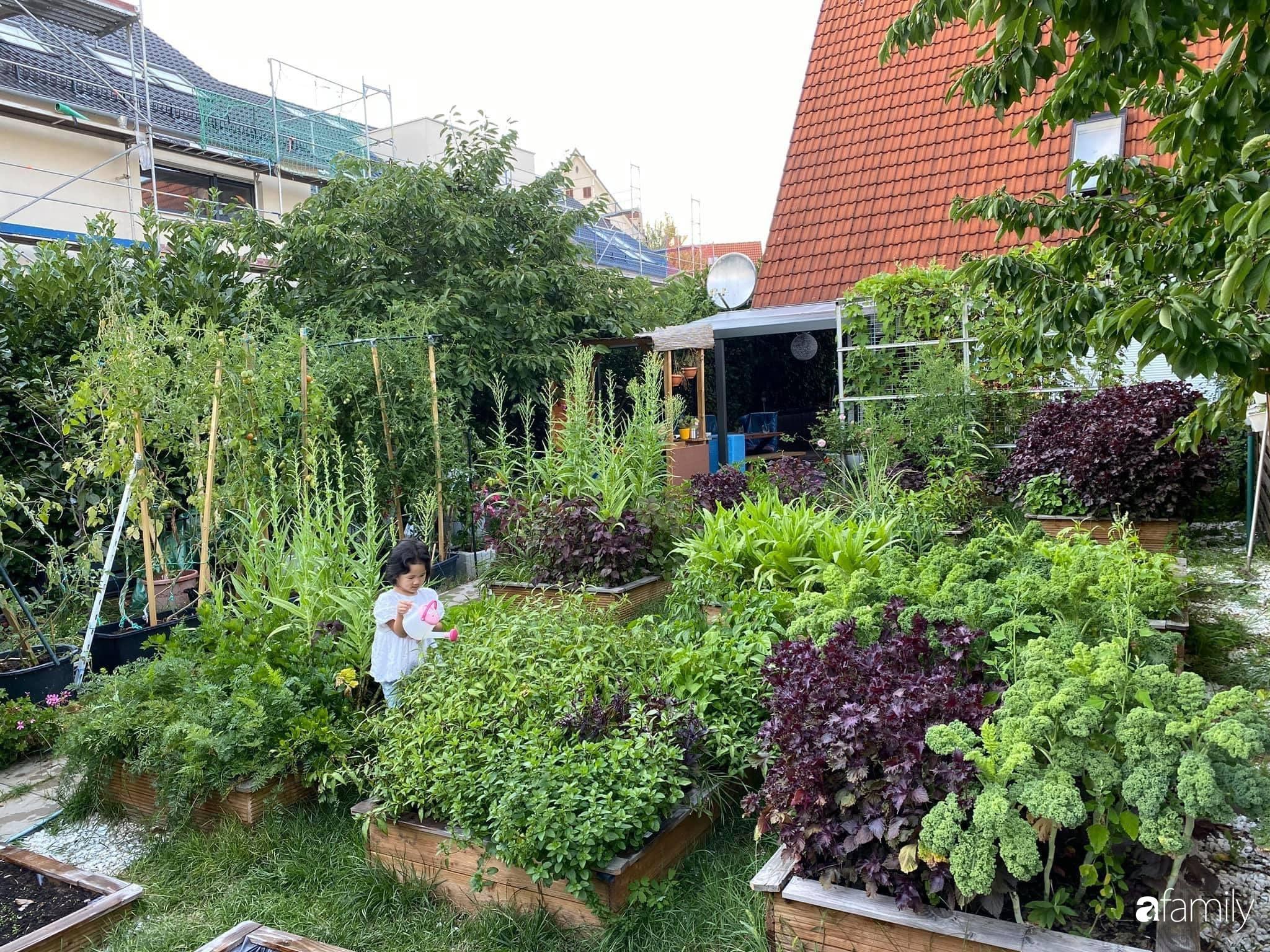 Khu vườn 300m² giữa đô thị náo nhiệt vẫn an yên, thư thái nhờ mẹ Việt trồng cây và hoa tốt tươi - Ảnh 1.