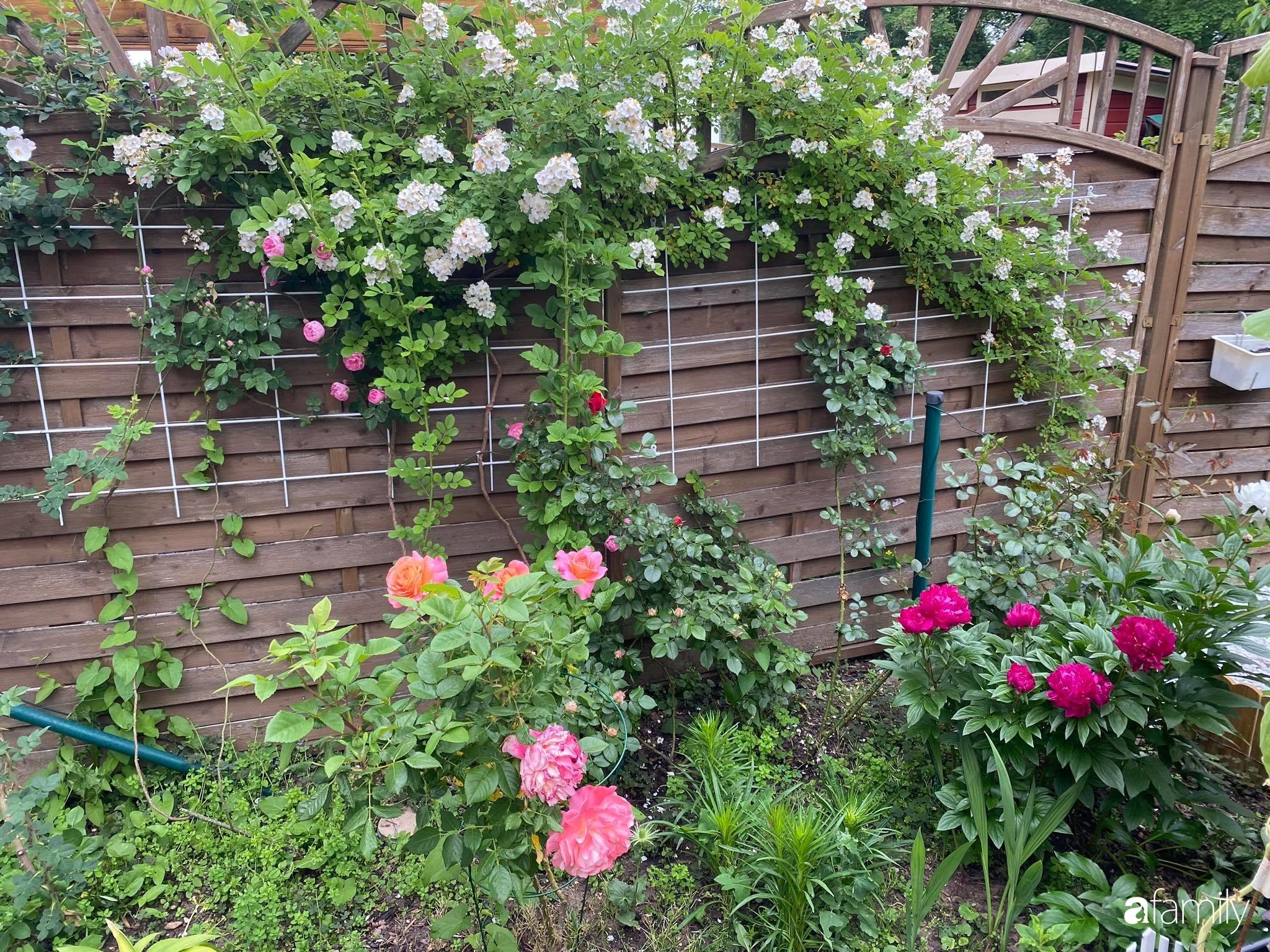 Khu vườn 300m² giữa đô thị náo nhiệt vẫn an yên, thư thái nhờ mẹ Việt trồng cây và hoa tốt tươi - Ảnh 4.