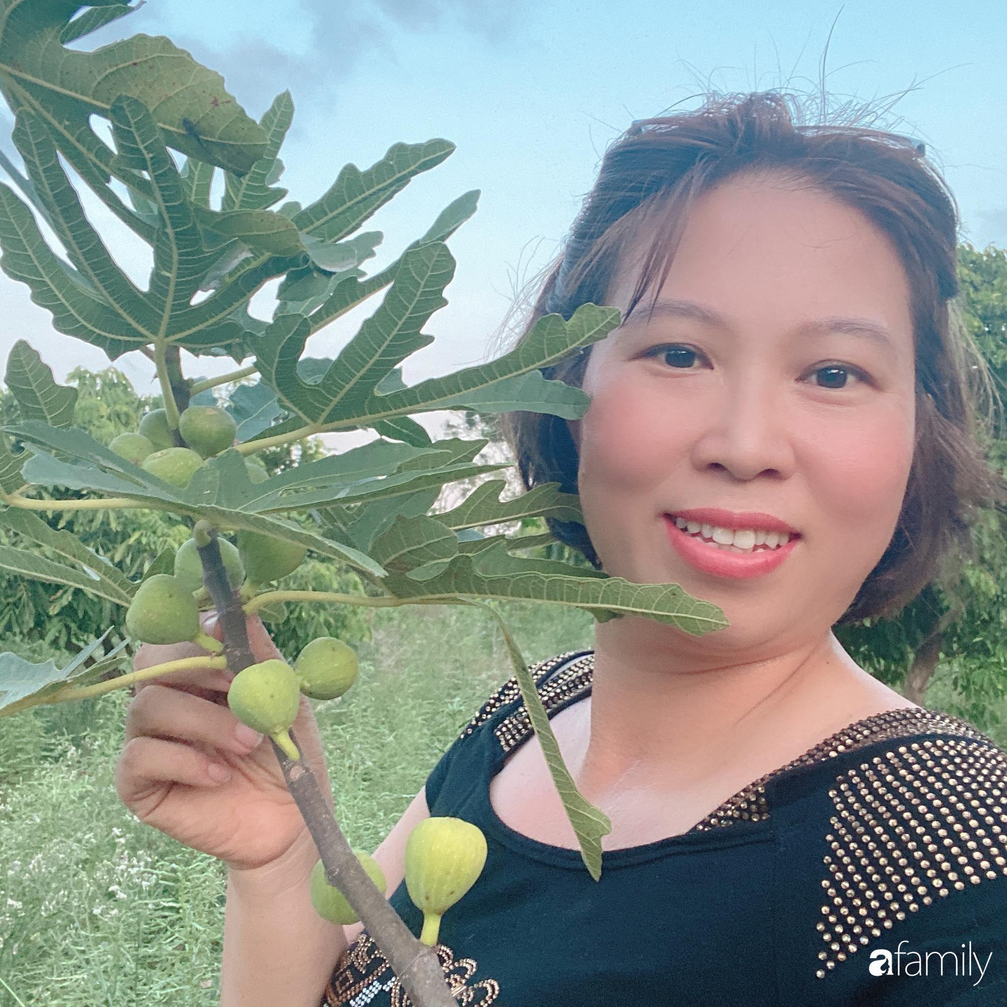 Tận dụng sân thượng chung cư, nữ giám đốc Hà Nội chi 8 triệu trồng đủ loại rau quả sạch - Ảnh 3.