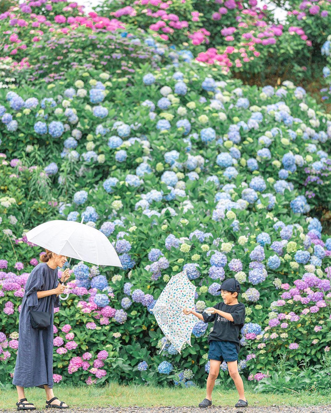 """Có một nước Nhật đẹp đến nao lòng qua ống kính của ông bố trẻ """"mê"""" chụp ảnh vợ và con trai, ai xem xong cũng """"tan chảy"""" - Ảnh 27."""