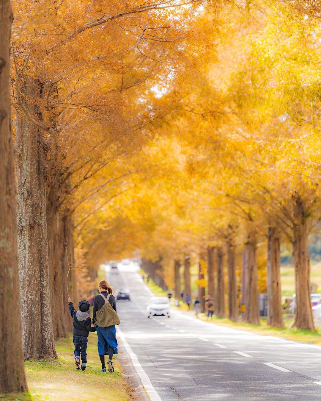 """Có một nước Nhật đẹp đến nao lòng qua ống kính của ông bố trẻ """"mê"""" chụp ảnh vợ và con trai, ai xem xong cũng """"tan chảy"""" - Ảnh 22."""