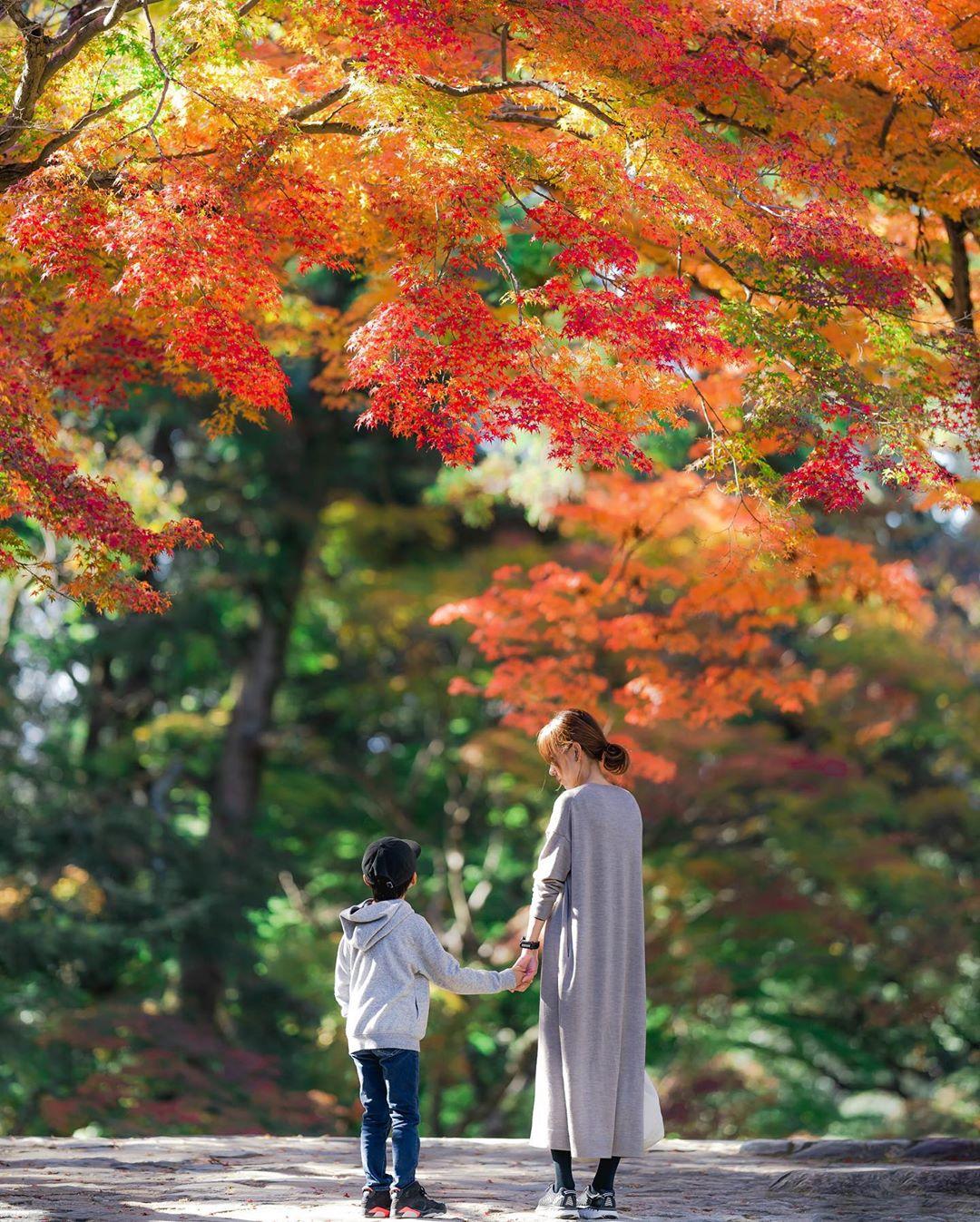 """Có một nước Nhật đẹp đến nao lòng qua ống kính của ông bố trẻ """"mê"""" chụp ảnh vợ và con trai, ai xem xong cũng """"tan chảy"""" - Ảnh 5."""
