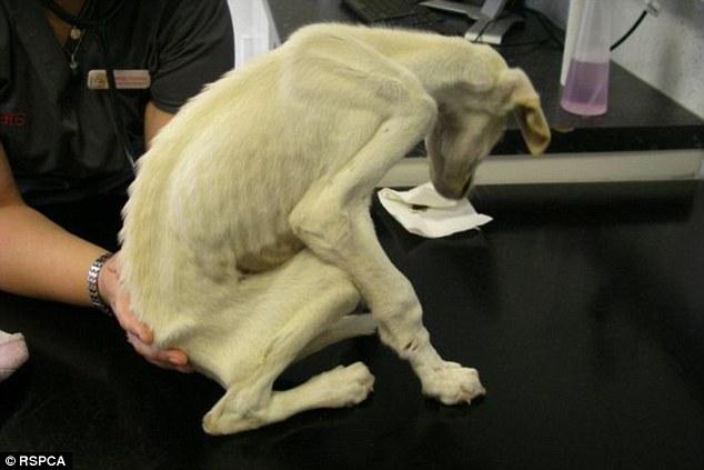 Phát hiện con vật gầy chỉ còn da bọc xương đứng không vững, cảnh sát lập tức điều tra phát hiện sự thật về người phụ nữ ngược đãi độc vật - Ảnh 3.