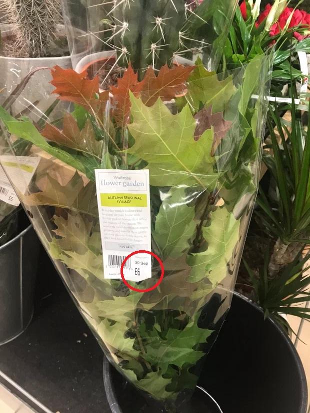 Gây phẫn nộ vì bán nhánh lá cây mọc đầy ngoài đường với giá 177k, chuỗi siêu thị nổi tiếng còn bị bóc loạt phốt trong quá khứ - Ảnh 1.