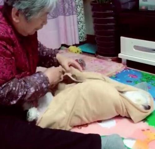 Gửi chó cưng đến cho bà ngoại chăm giúp, chàng trai khi đến thăm liền ngỡ ngàng với cảnh tượng trước mắt nhưng không cầm được nước mắt - Ảnh 2.